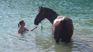 Rehabilitación del caballo en el agua.