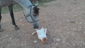La curiosidad mato al gato o al caballo...