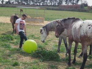 La pelota y jugar con los caballos.